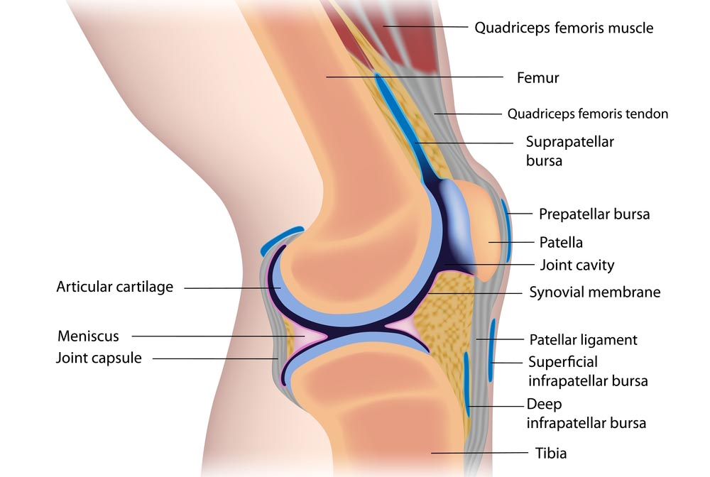 Suffering From Knee Pain Discover More Options Stevens Point Ortho